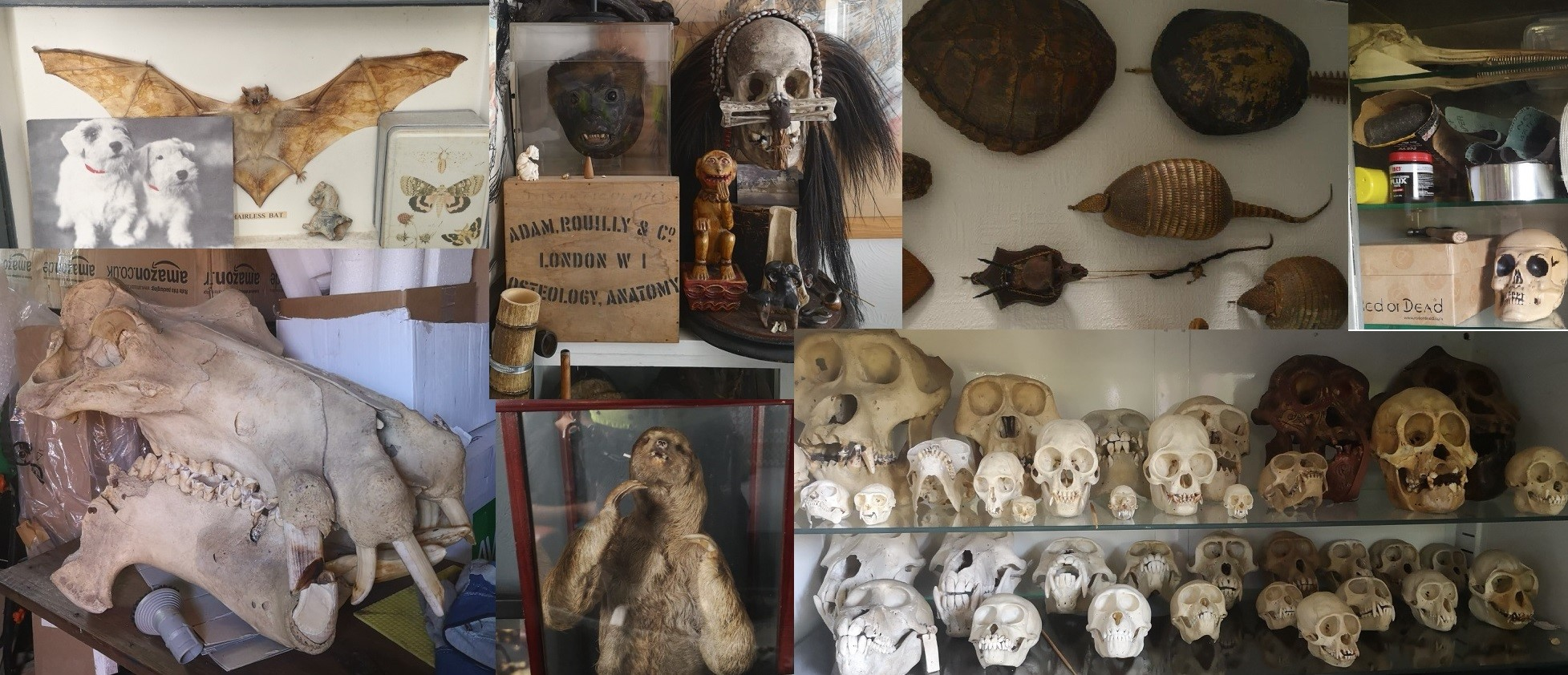 eBay seller pleads guilty to illegally trading endangered animal skulls